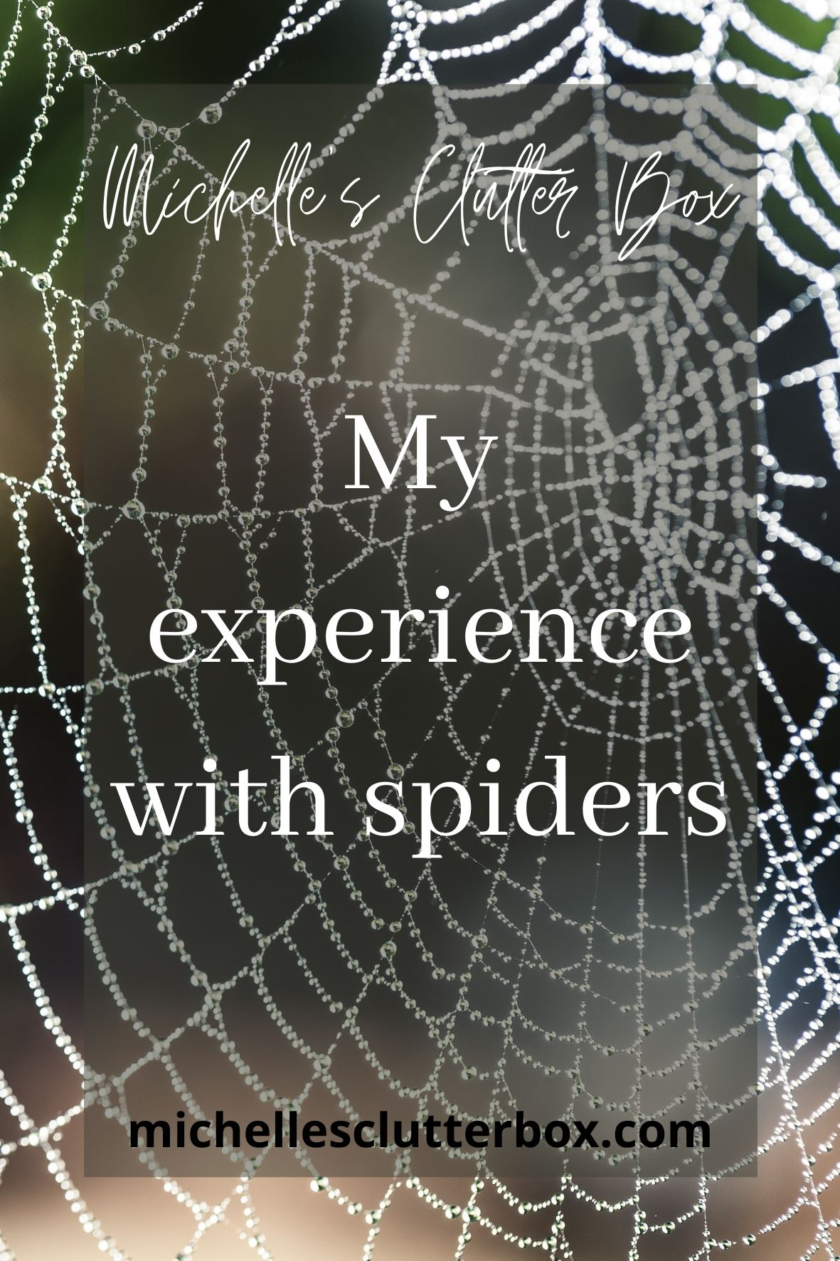 My experience with spiders