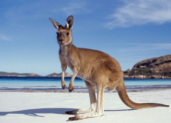 We moved to Australia